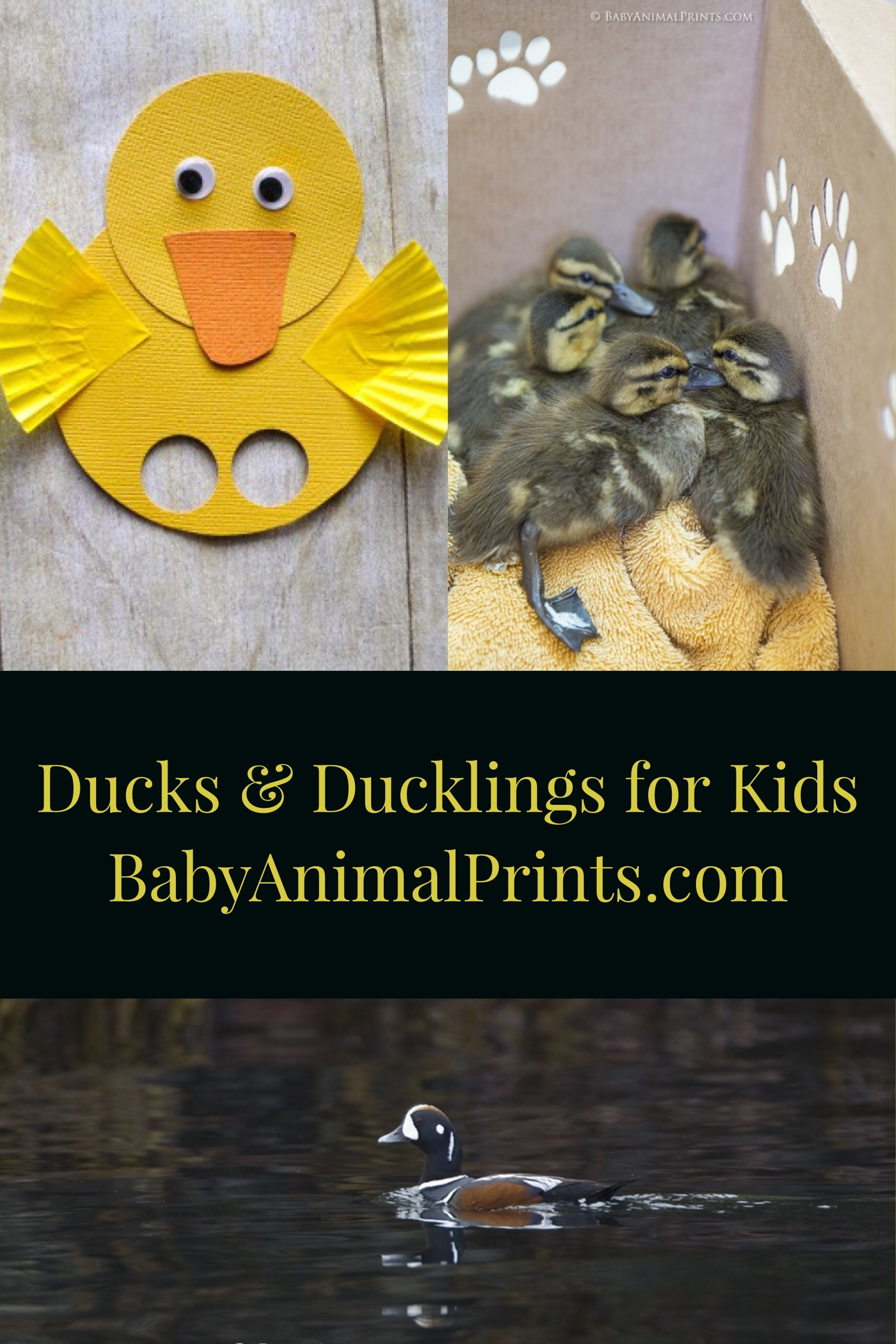 Learning About Ducks With Kids