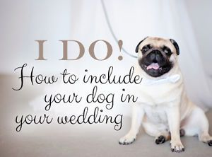 They're there for us through thick and thin, for richer or poorer, in sickness and in health. No, not your new husband or bride-to-be… your dog! Dogs provide unconditional love and companionship. Your...