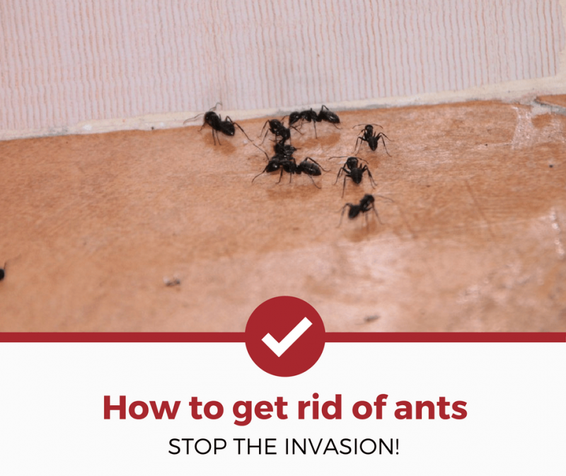 want to learn how to get rid of ants in your kitchen t yard and rh pinterest com