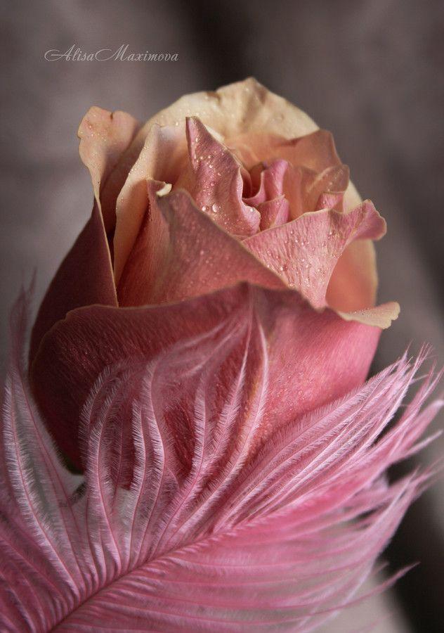 pinbrenda reed on ..huєs Ơf Ðusk Ʀøsє༺⚜   pinterest   amor