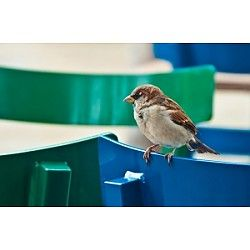 Birding For Families at Central Park Conservancy New York, NY #Kids #Events