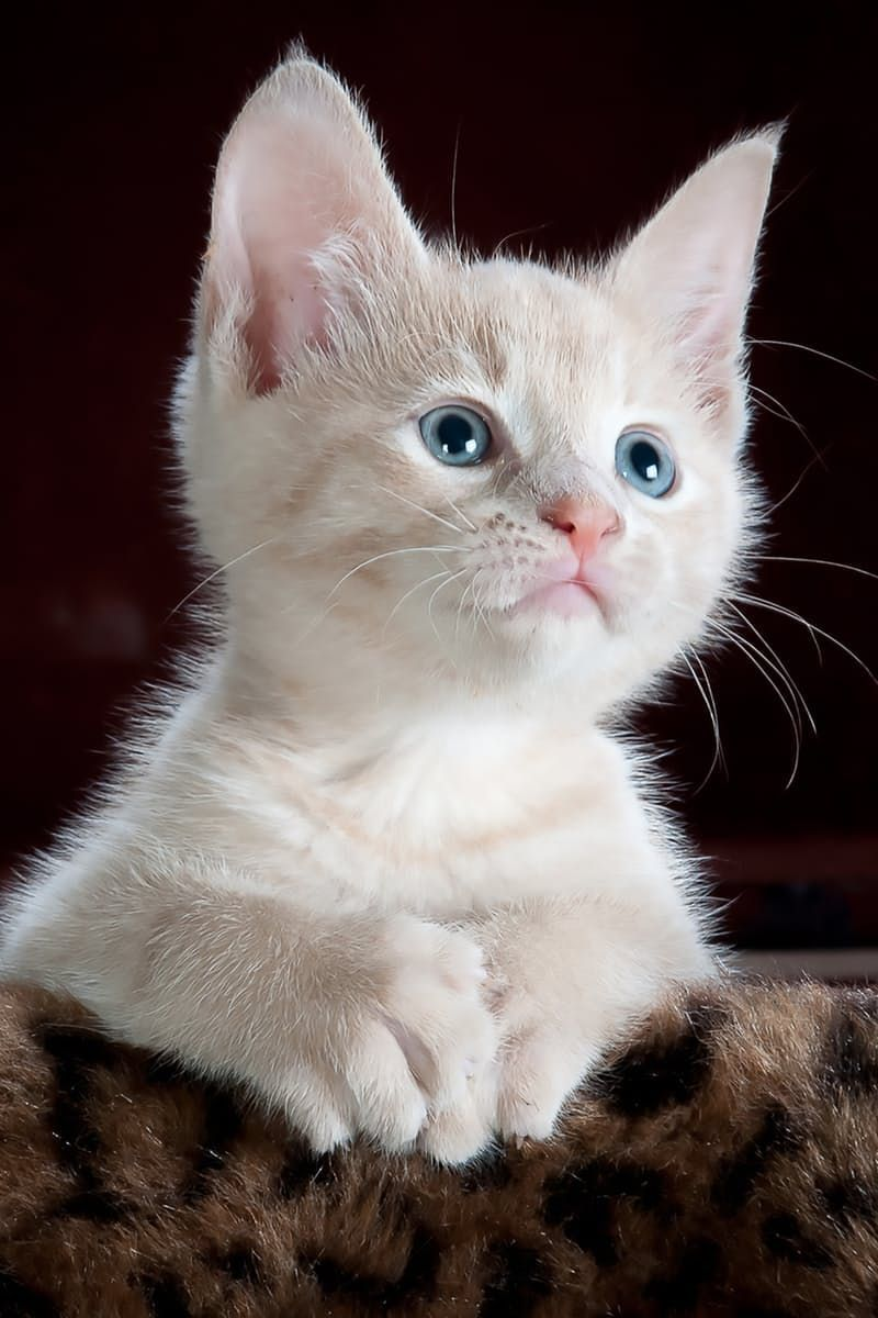 cute kitten kitty cat All the cute Pinterest