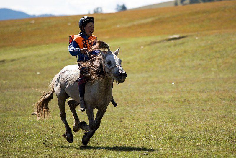 Das Pferderennen beim Naadam- Festival in der Mongolei - ein Kind sitzt auf einem Pferd und treibt es über eine Wiese