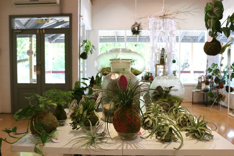 Terrarium Shop Melbourne Little Lands