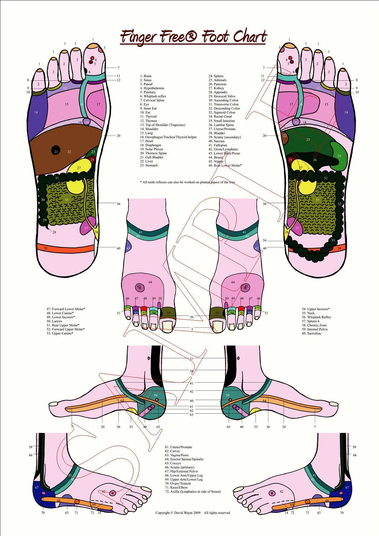 Image Result For Free Reflexology Pictures