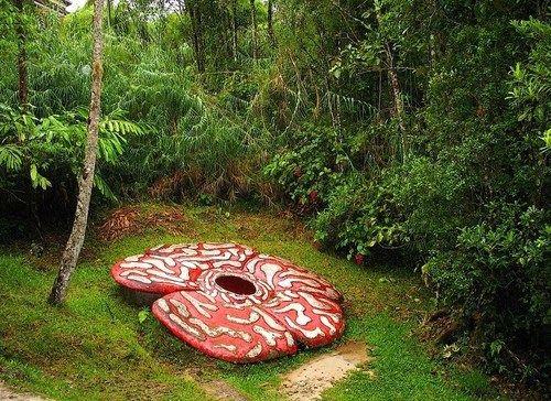 The Soul Is Bone Rafflesia Arnoldii Is A Member Of The Genus Seltsame Blumen Ungewohnliche Blumen Exotische Blumen