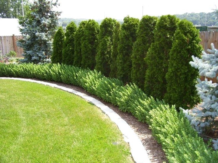 55 Beautiful Backyard Landscaping Along Fence Decoration Ideas is part of Landscaping along fence, Fence landscaping, Backyard landscaping designs, Privacy landscaping, Landscape edging, Evergreen plants - The secret to creating a beautiful garden behind is taking into account your DIY experience and thinking about sorting someone reliable if it arises outside of your expertise  If you …