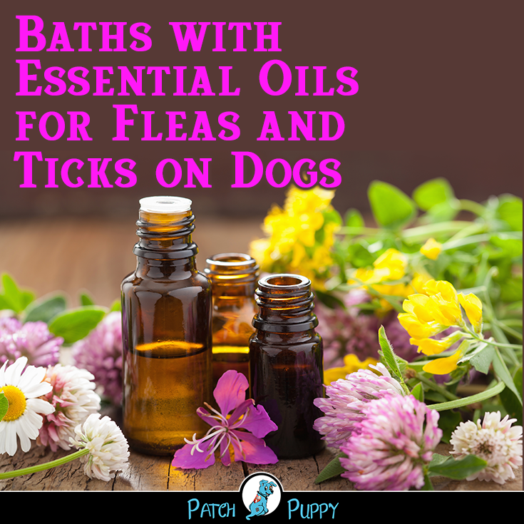Natural Flea And Tick Control For Dogs The Ultimate Guide Essential Oils Patchouli Essential Oil Best Essential Oils