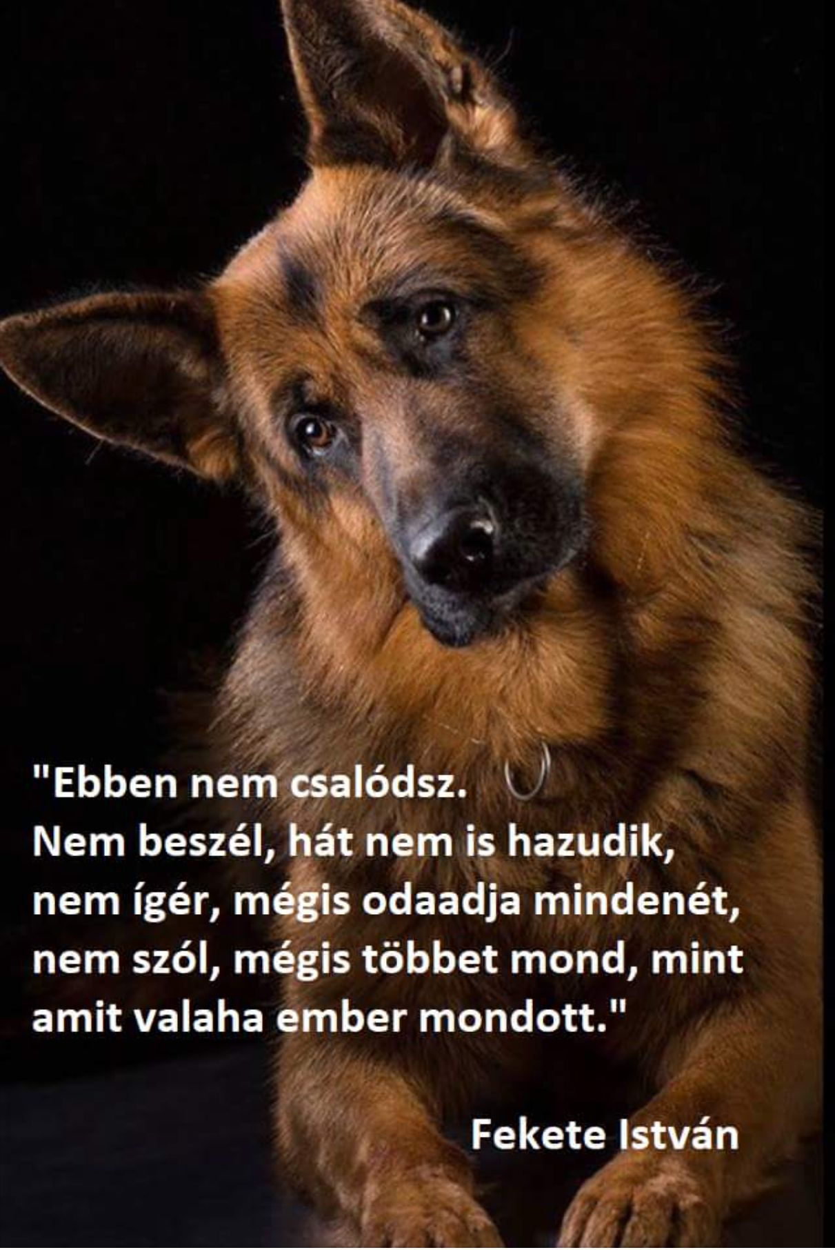 kutya ember barátság idézetek Pin by Erika Molnárné on Amit megálmodtál Magadnak! | Dog quotes