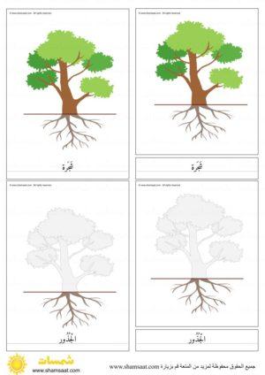 اجزاء الشجرة بطاقات مطابقة مكونة من ثلاثة أجزاء بزل الشجرة 1 Activities For Kids Activities Kids