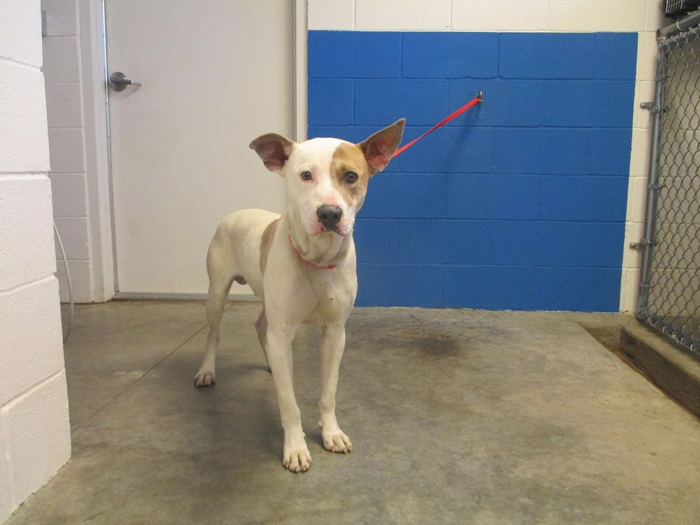 Pin On Tennessee Pets In Need Of Adoption Or Rescue