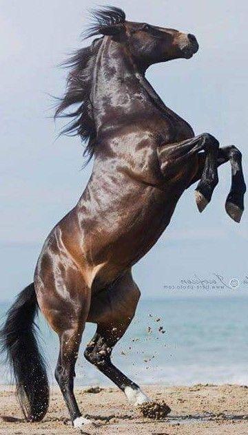 Elegant Horse Black Brown Animal Most Beautiful Horses Beautiful Horses Horses