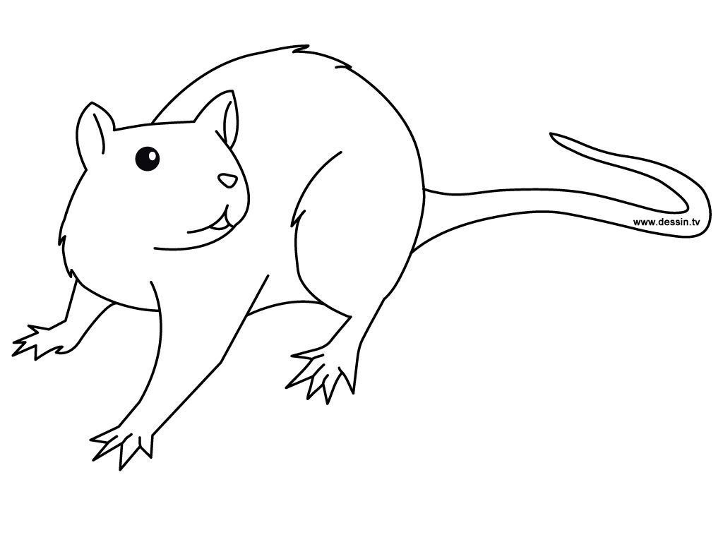 Free Printable Rat Coloring Pages For Kids Animal Coloring Pages Coloring Pages For Kids Coloring Pages