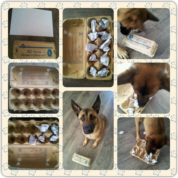 Diy Dog Brain Games Hond Activiteiten Honden Spelletjes