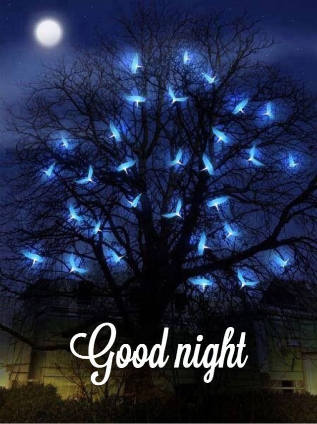 Image result for goodnight pinterest images