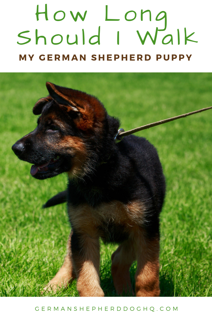 Establishing an exercise routine for your German Shepherd