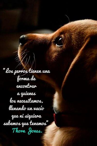 Citas Sobre Perros Página 5 Mi Perro Es único Perros Frases Perros Animales Frases
