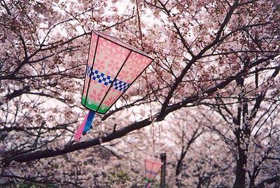 Atelier M Living Hanami Cherry Blossom Festival Sakura Hanami Cherry Blossom Festival Cherry Blossom