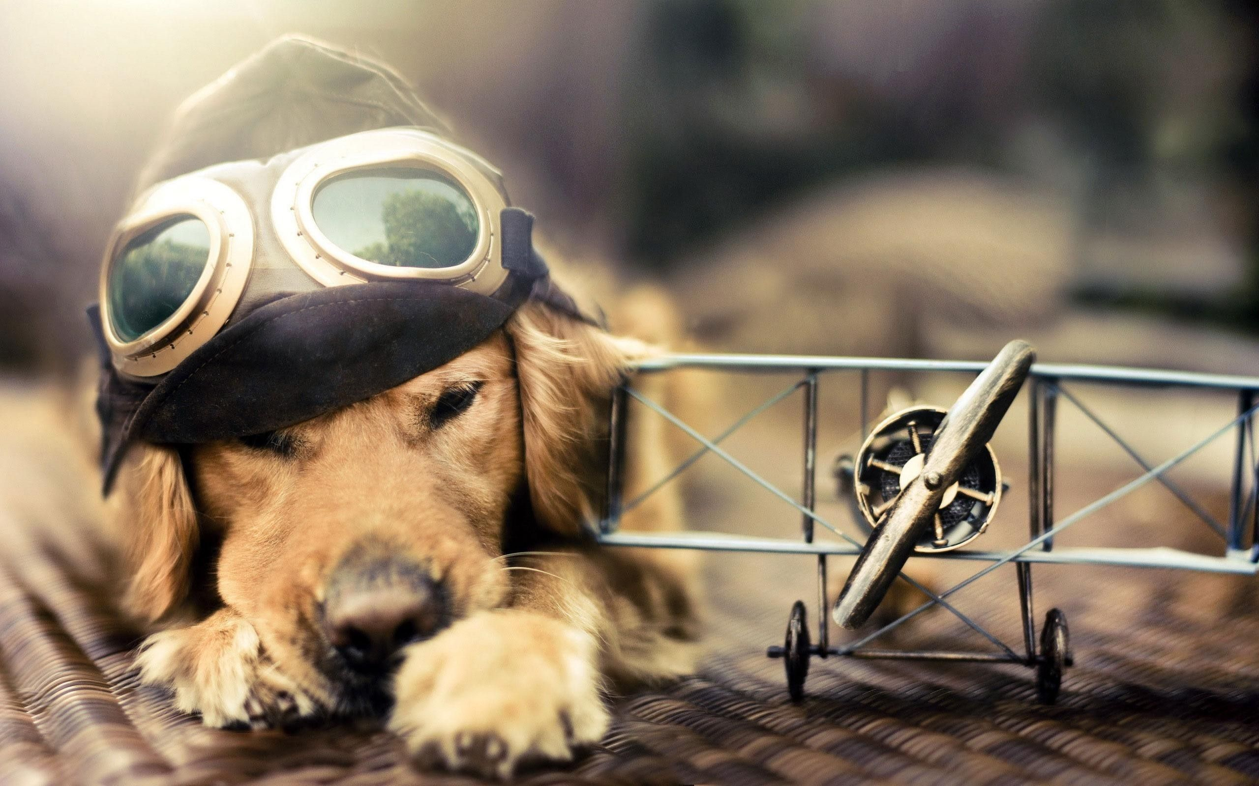 Pilot Sunlight Airplane Dog Miniatures Goggles Animals