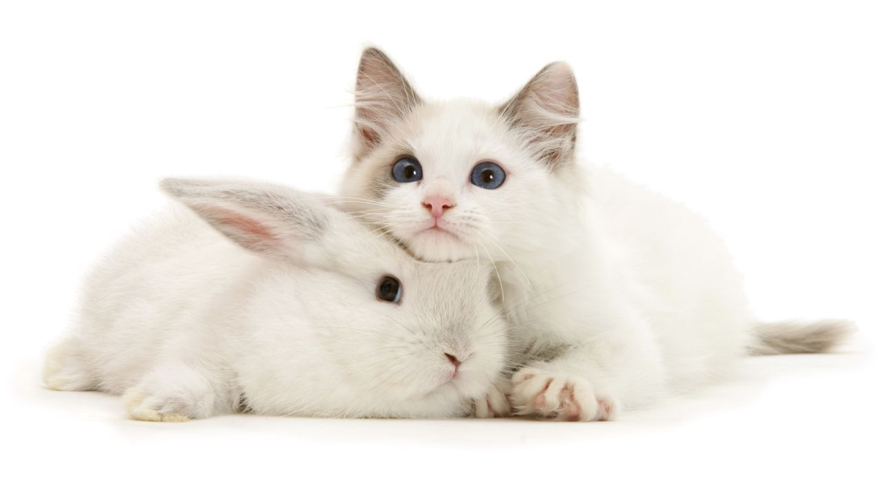 Snapcat Felines And Bunnies Look Exactly The Same Pet Bunny Cute Animals Cat Care