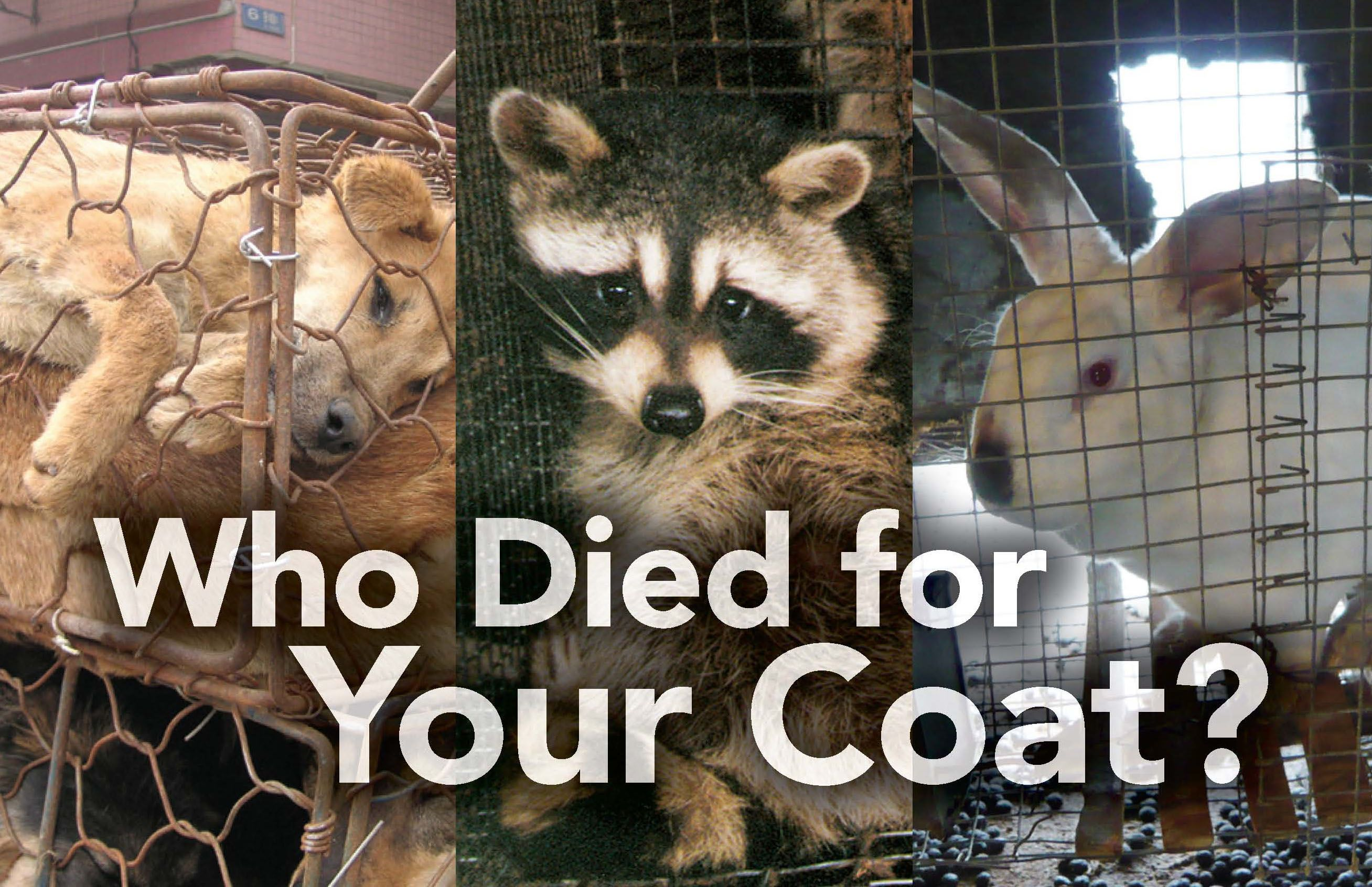 WID ANIMALS USED FOR THEIR FURS | Never forever 21 | Animal