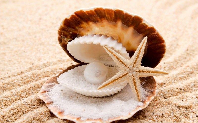 Playas De Arena Conchas De Mar De La Perla De Concha De Almeja Fondo - Fotos-de-conchas-de-mar