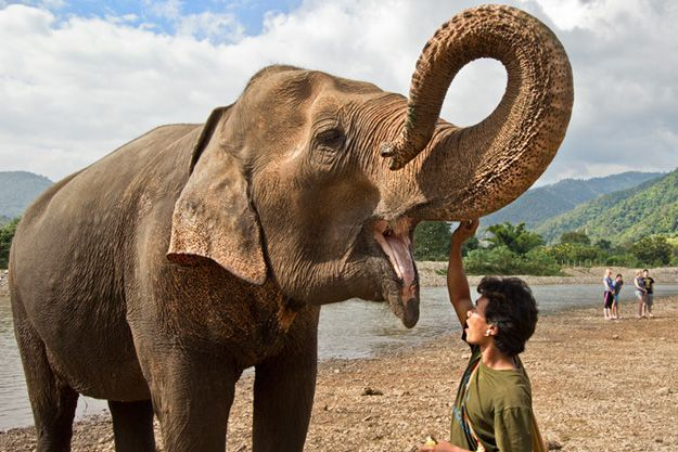 And the Winner Is...A Very Interting Twist to the Save Elephant Foundation Benefit