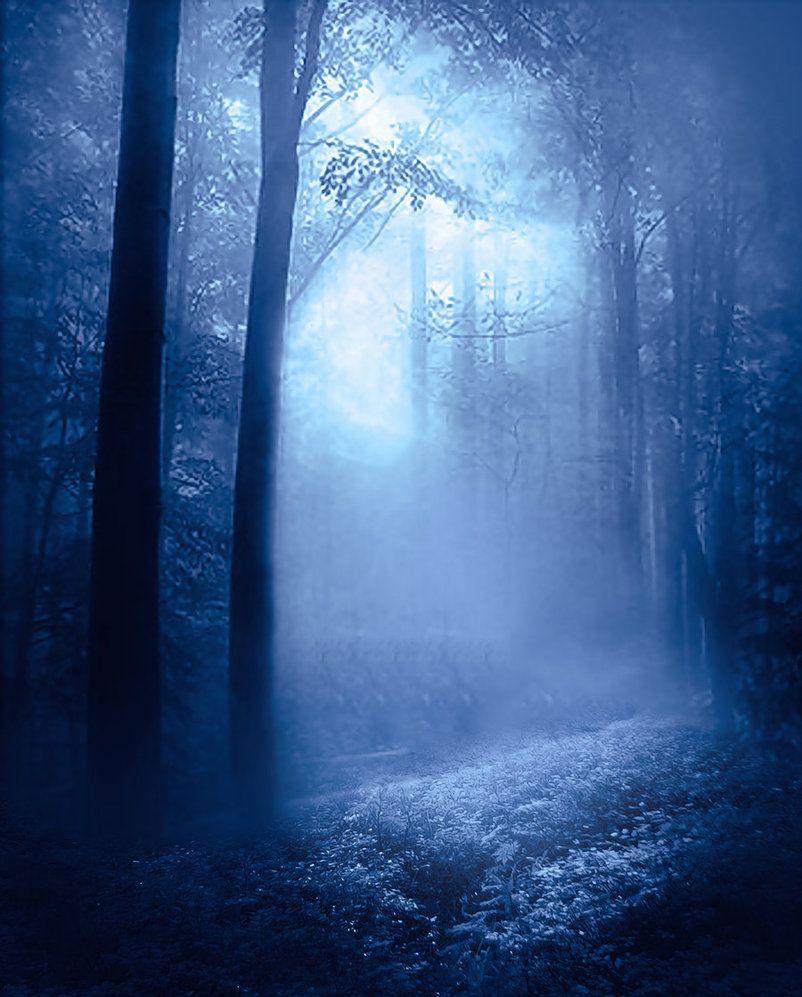 Ethereal landscapes nature photography by donna geissler - Mirkwood Morning By Nieblastocks On Deviantart
