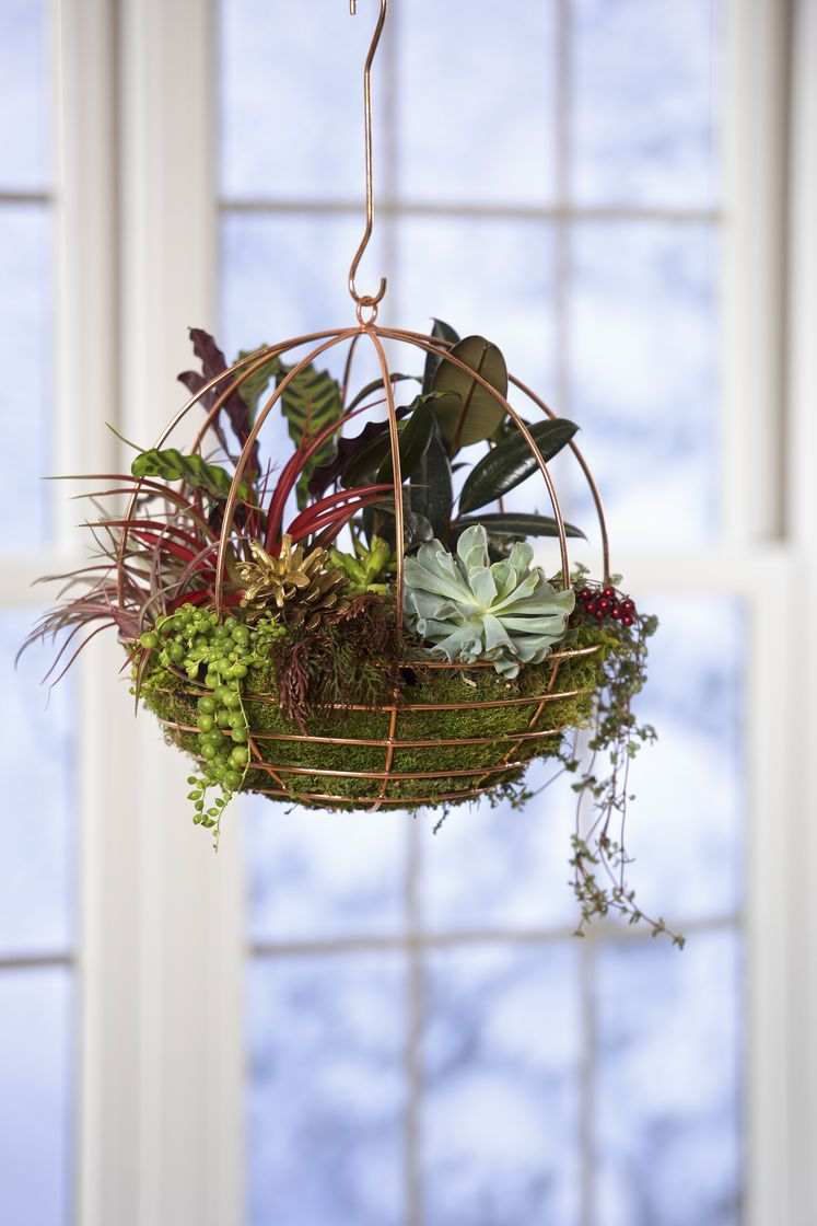 Copper wire globe hanging basket air plant terrarium 2995 terrarium 2995 product details copper plated stainless steel wire with lacquer finish globe 12 in diameter x 12 34 h hook 8 l wire gage 4 keyboard keysfo Choice Image