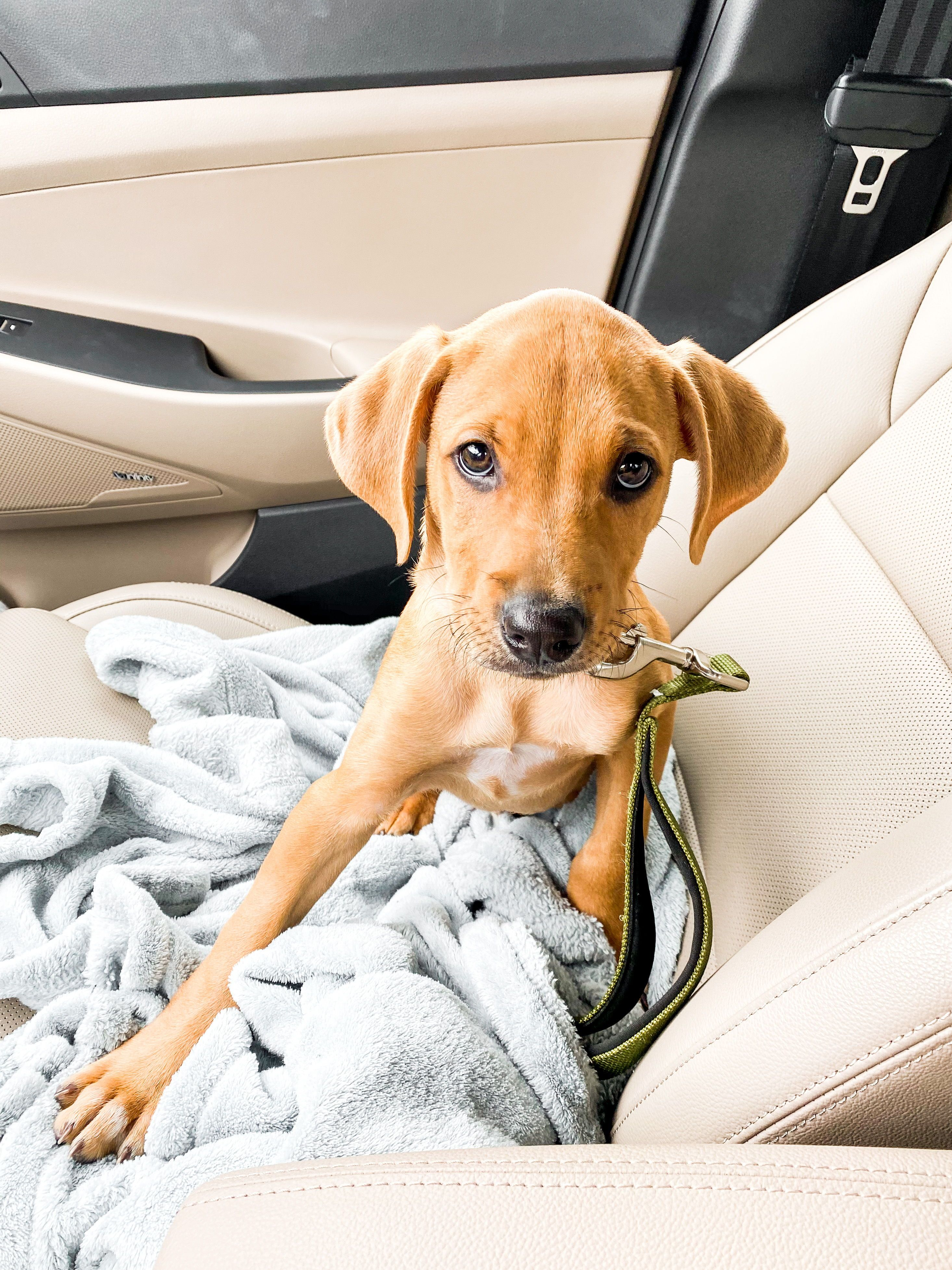 How to find the perfect rescue puppy prickly fresh in