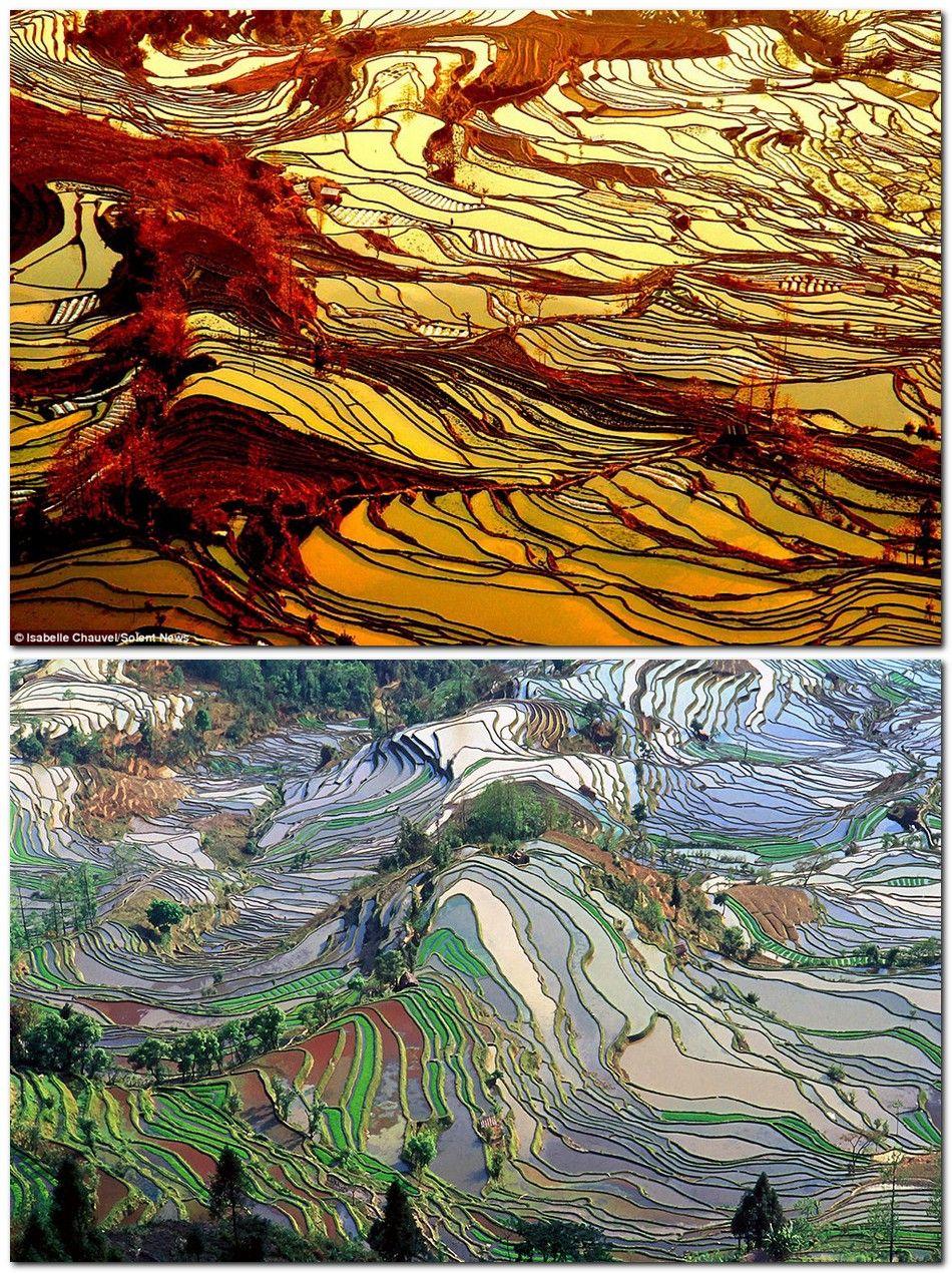 Las Terrazas De Arroz De Yuanyang En China Las Técnicas De