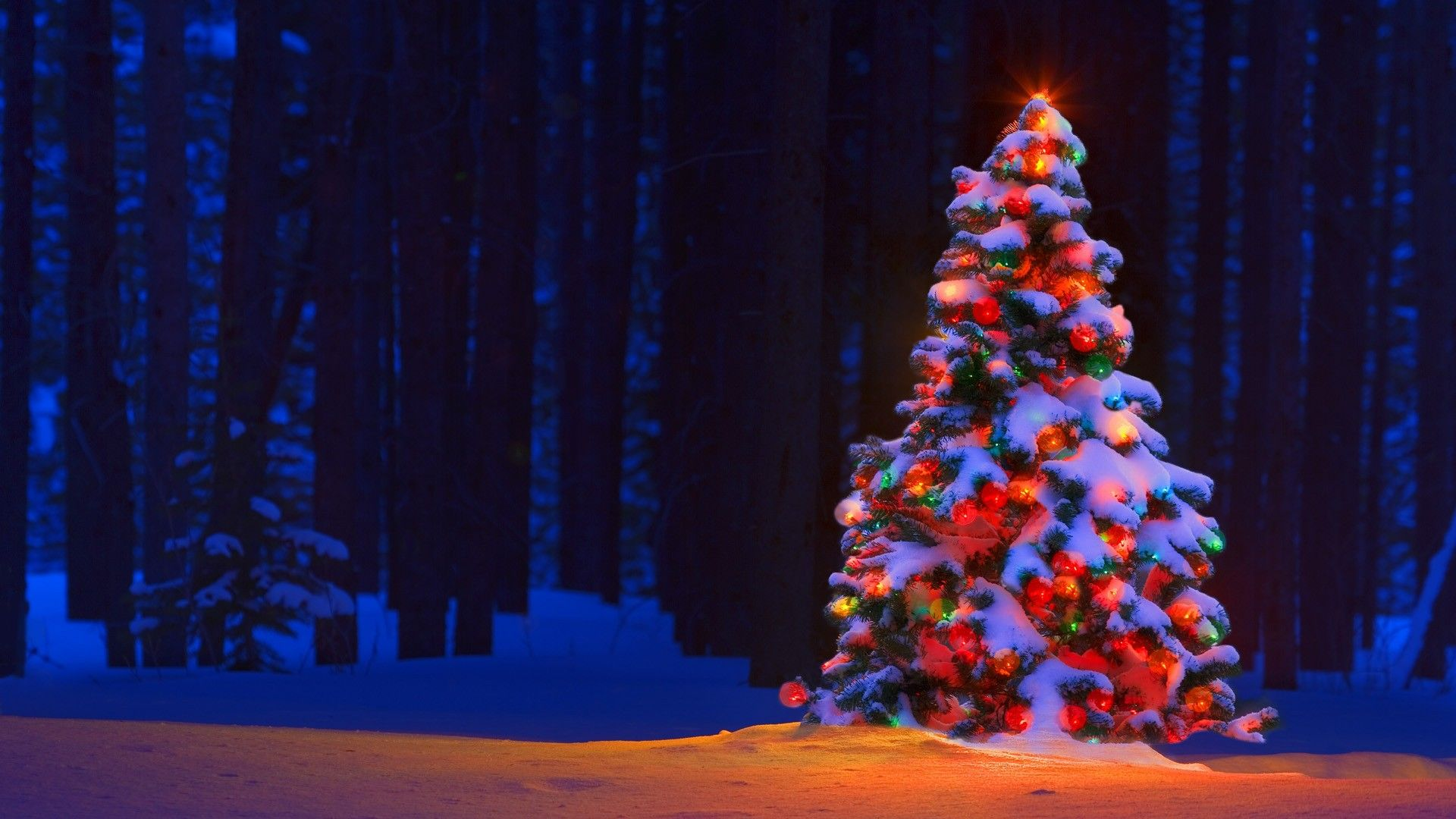 50 beautiful christmas tree wallpapers - Snow Christmas Tree