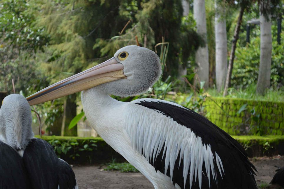 Kebun Binatang Bandung Terbaru