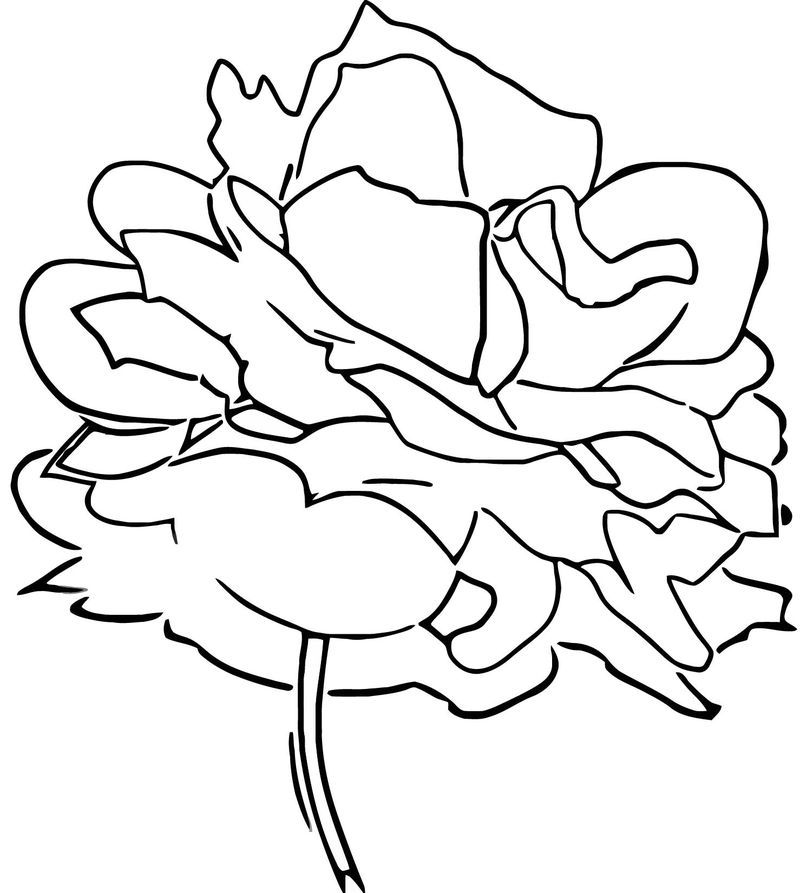 Red Roses Coloring Pages Designs Collections