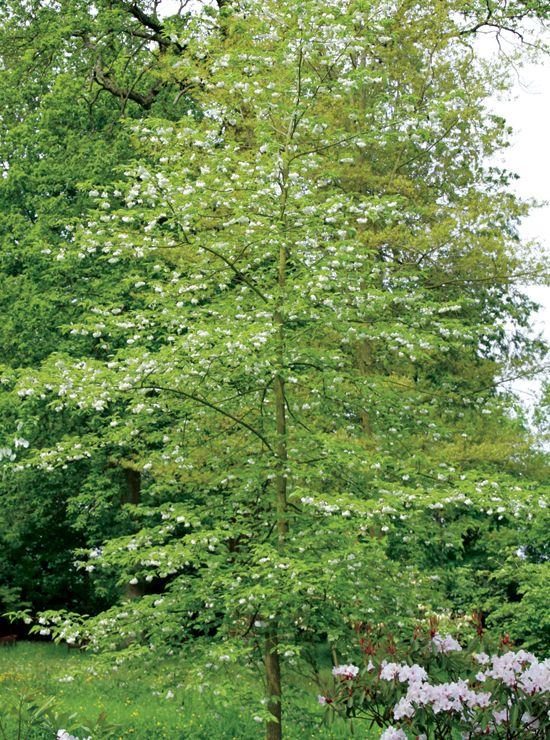 trees-carolina-silverbell.jpg