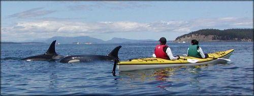 The Magic Of Orca Sea Kayaking Kayaking San Juan Islands