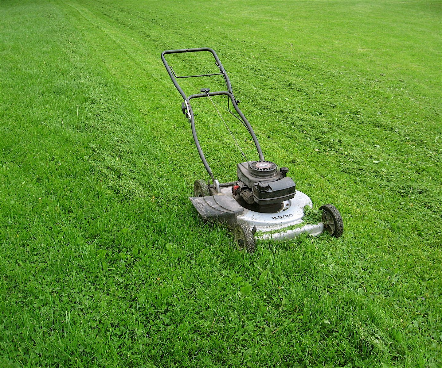 Lawn Mowing Elermore Vale Fox Mowing Your Local Gardening Services And Lawn Mowing Specialists Garden Maintenance Sustainable Landscaping Lawn Mower