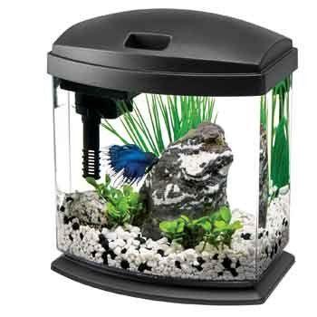 Make Mini Aquarium Sensory Bottles So Kids Can Tap On The Aquarium Wall Without Getting In Trouble As They Shake Up S Aquarium Fish Tank Fish Tank Aquarium Kit