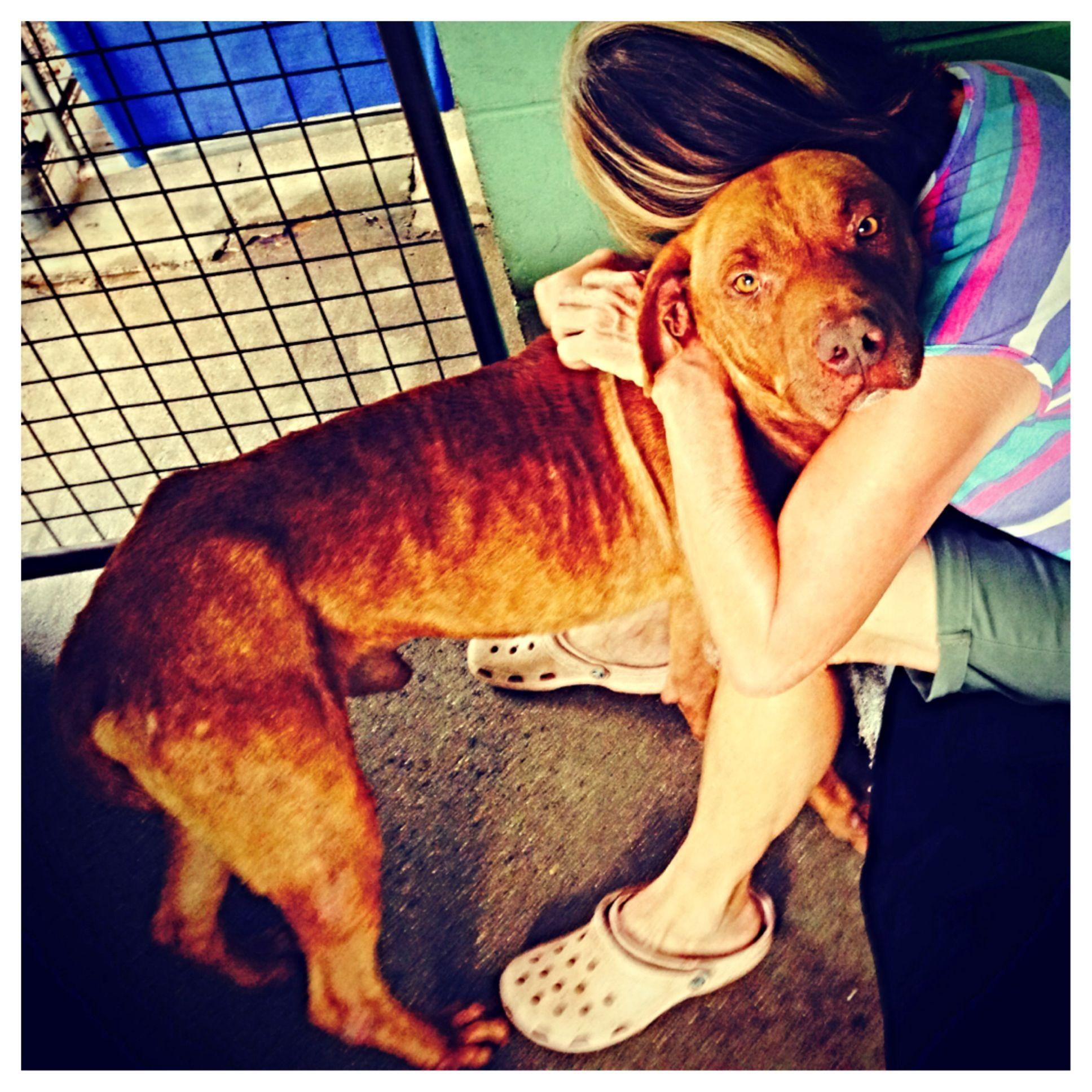 Be The Change For Pets This Xmas Yaps Animal Shelter Animals Animal Shelter Dog Adoption