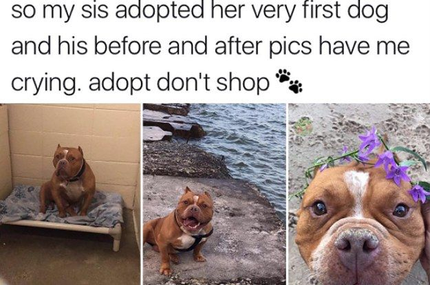 21 Wholesome Animal Tweets That Will Make You Say I M Not Crying