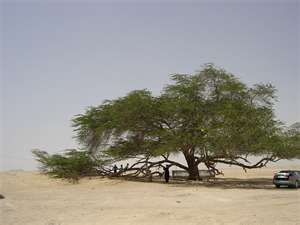 Bahrain's tree of life....I wanted to find camels around it like I really saw it.