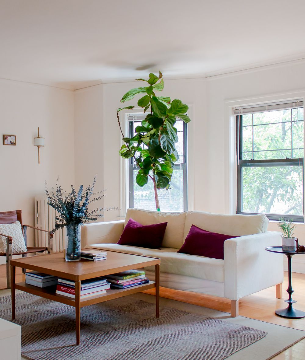 Jess's apartment is suffused with soft natural light. The fiddle leaf plant is from Gethsemane Garden Center.