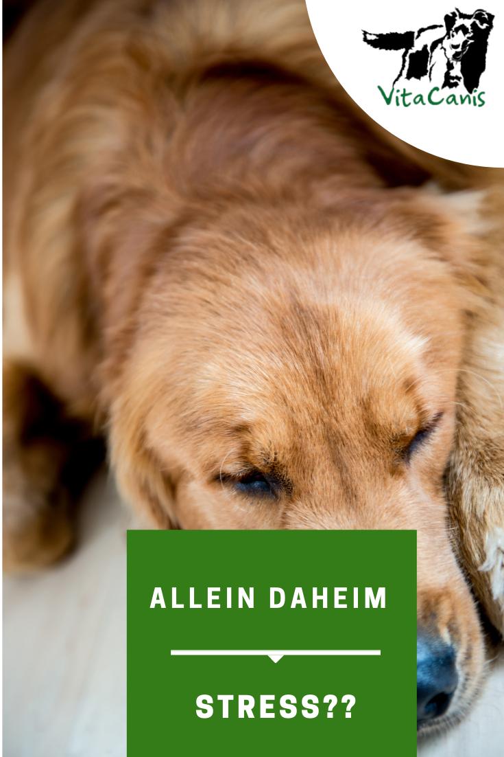 Lass Mich Nicht Allein Trennungsstress Teil 1 Hundchen Training Hund Bellt Und Hunde Erziehen