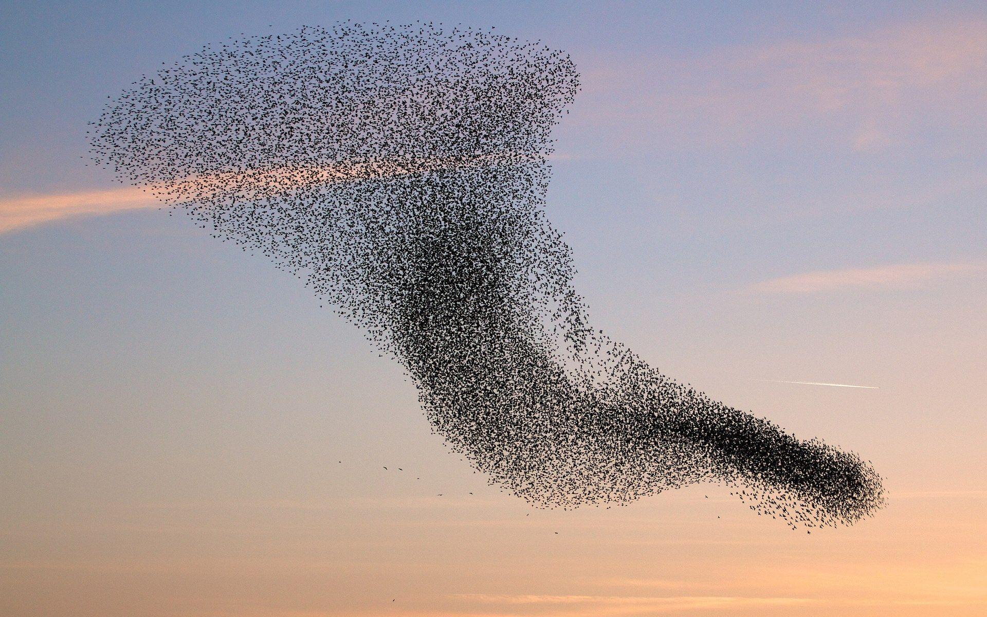 De vogeltrek is in volle gang! Wist je dat 90% van de vogels 's nachts vliegt? Met weerraders kunnen we de trek toch volgen en zijn er afgelopen dagen tientallen miljoenen trekvogels waargenomen!