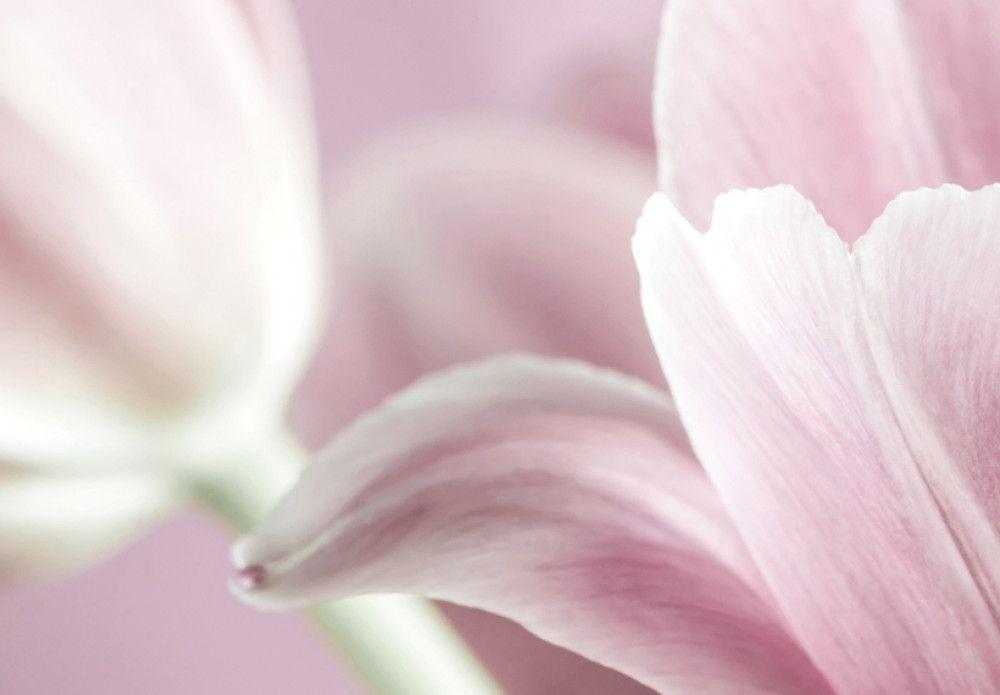 Quadro su tela Romantic Tulips nel 2020 | Stampa su tela ...