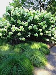 Image Result For Companion Plants For Annabelle Hydrangea Beautiful Gardens Hydrangea Landscaping Dream Garden