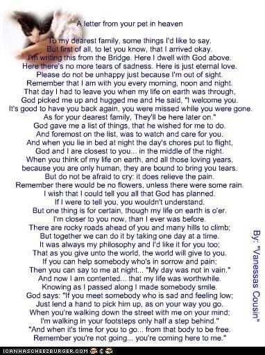 A Letter From Your Pet In Heaven With Images Dog Poems Pet