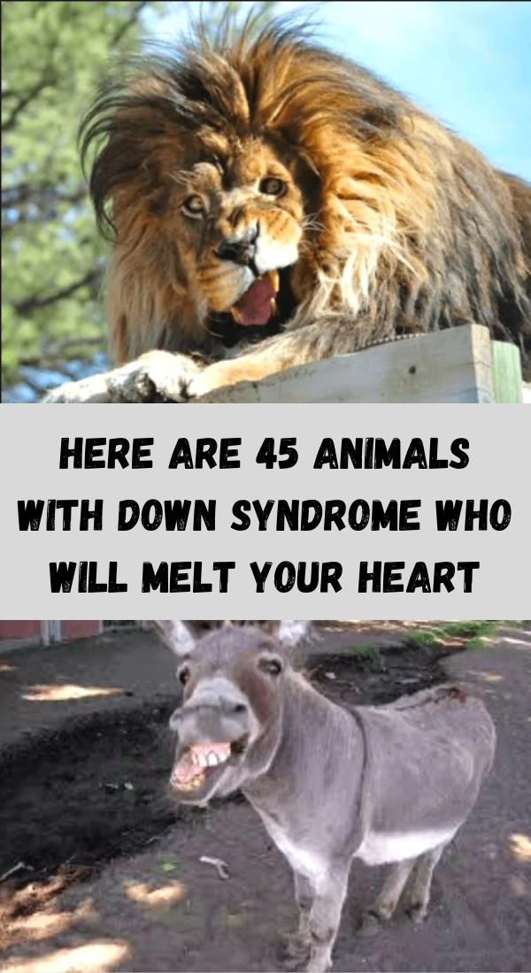 Here are 45 animals with Down syndrome who will melt your