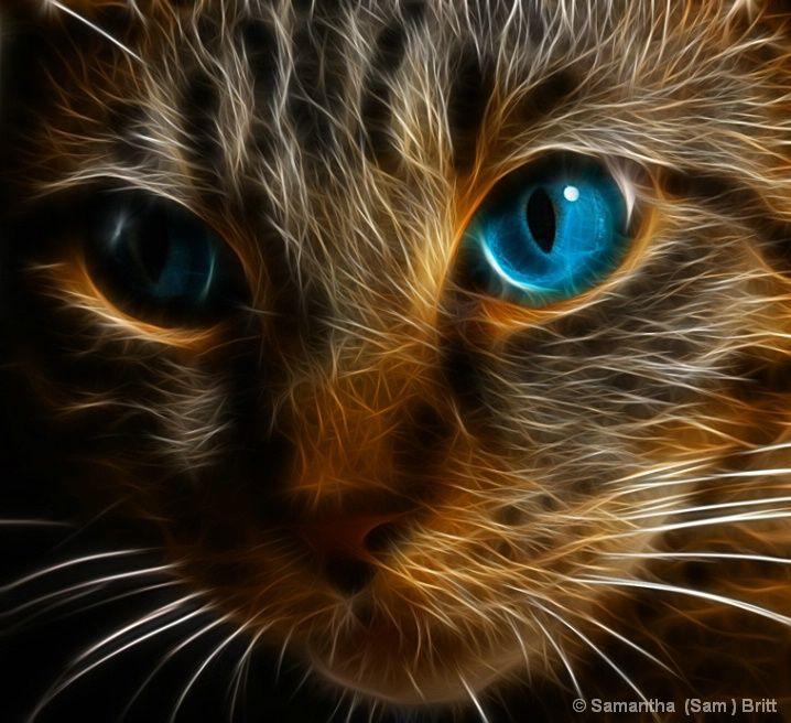 katze mit blauen augen samtpf tchen pinterest katze mit blauen augen auge und katzen. Black Bedroom Furniture Sets. Home Design Ideas