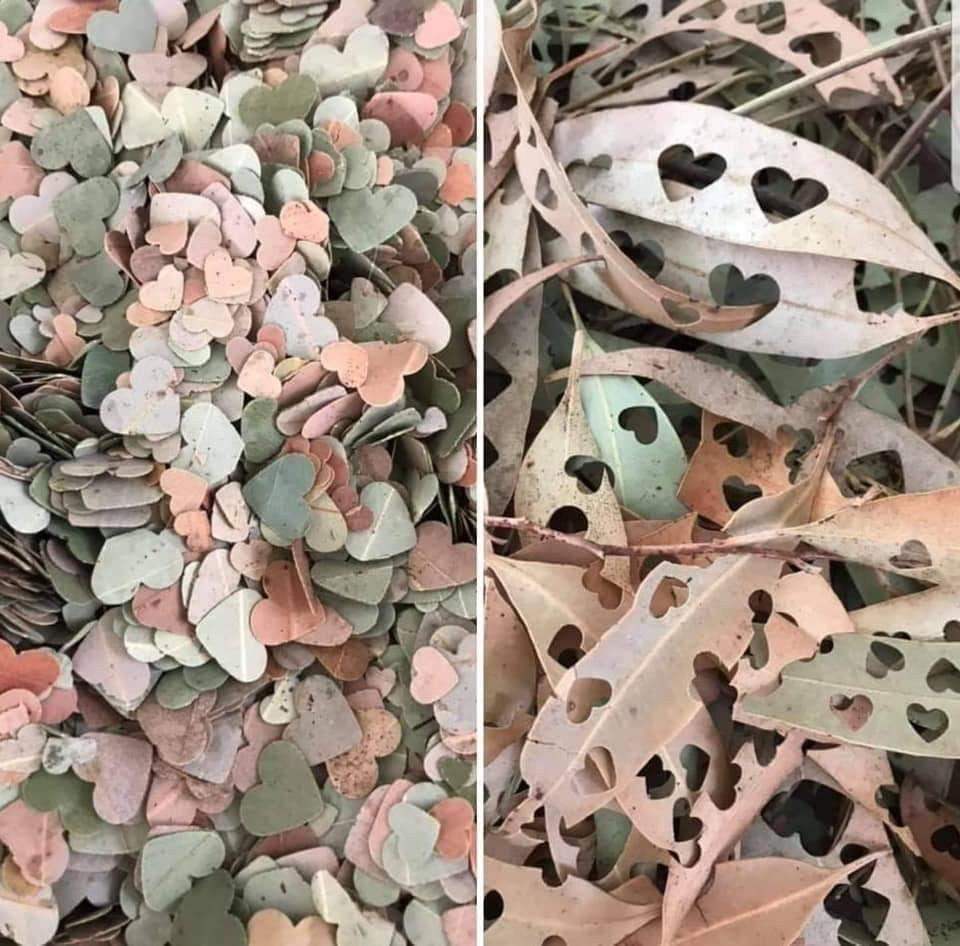 20 Boda Sencillas Leaf Confetti alternative to artificial – boda sencillas